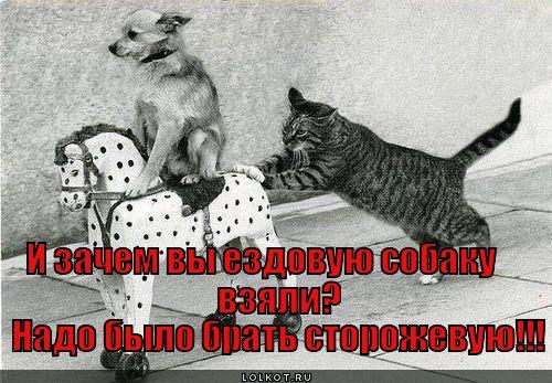 Ездовые собаки - это перебор.
