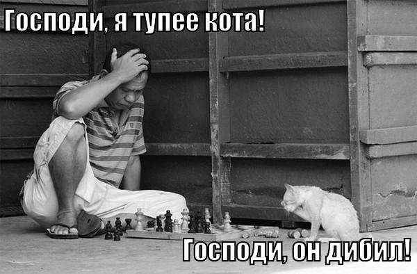 тупее кота
