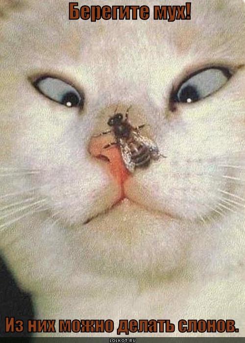 берегите мух!