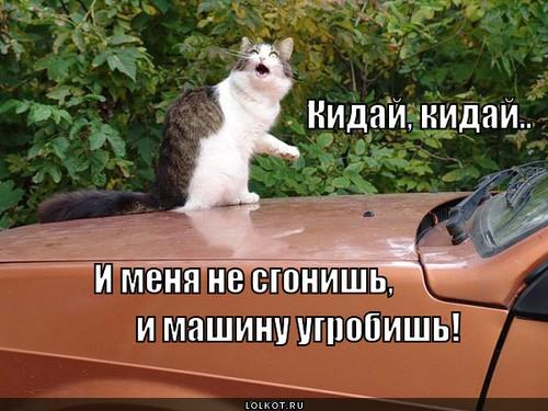 не гробь машину!