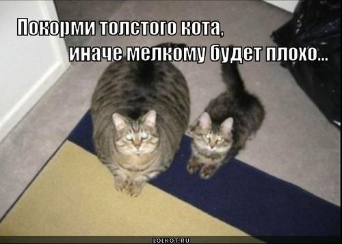 покорми толстого кота!