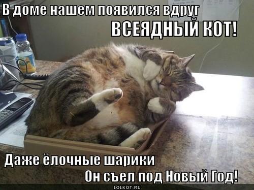 всеядный кот