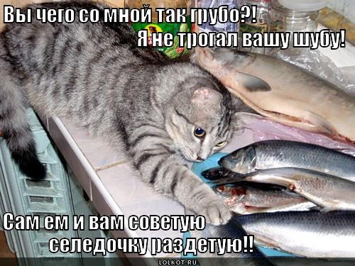 Действительно! На фига коту шубу есть?