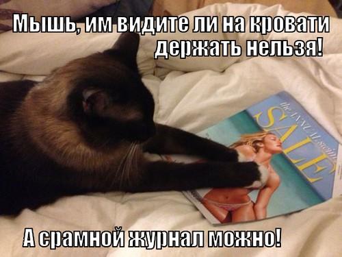 срамной журнал