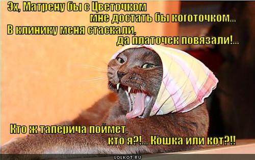 Кошкот