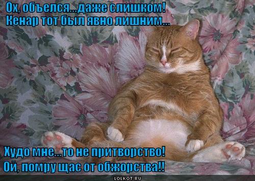 Котяка-объедака