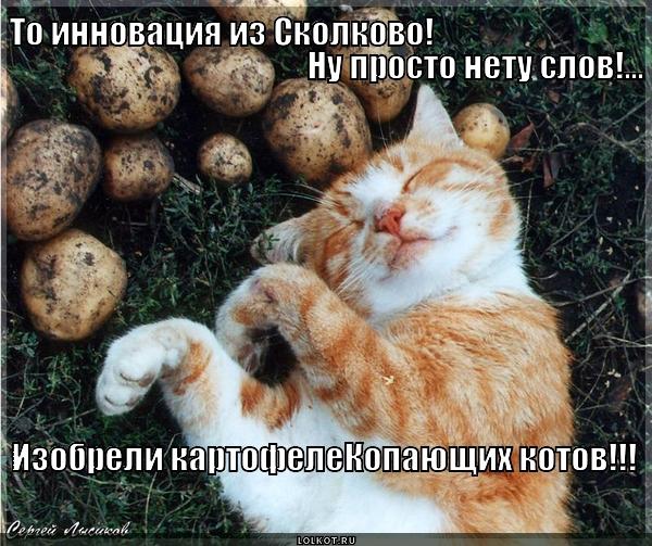 Картофелекомбайн