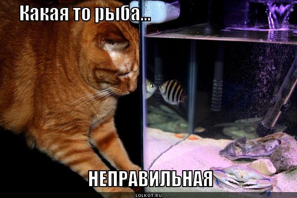 Рыбы не той системы