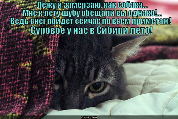 Суровое сибирское котэ