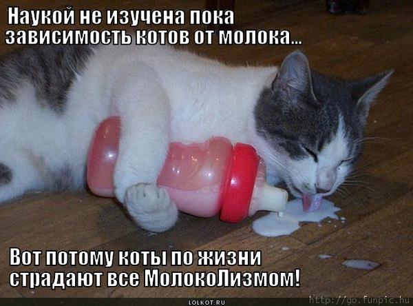 Зависимость котов от молока