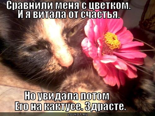 Кактусоцветик
