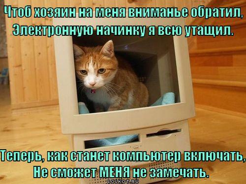 Не будь гадом - погладь котэ!