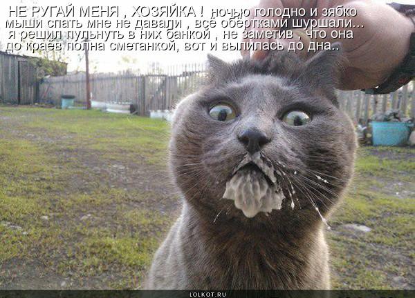 Исповедь шкодливого кота - (с) Елена Шевченко 9