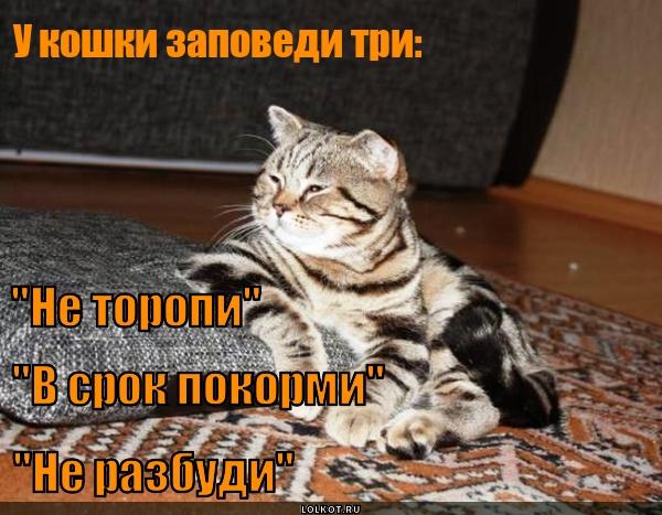 Кошачьи заповеди