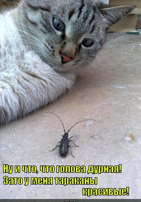 я думал ты одна а ты с тараканами картинка стаей, которой животные