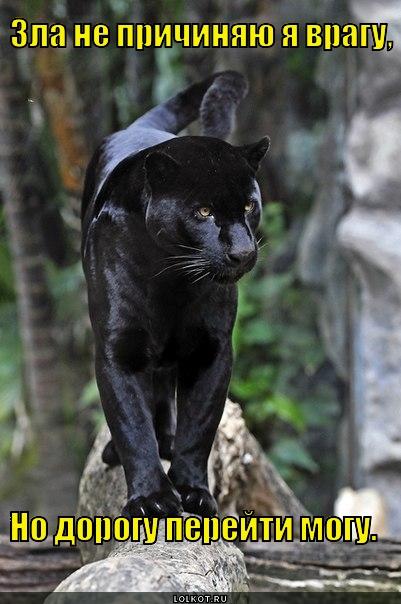 Черная кошка, не пробник
