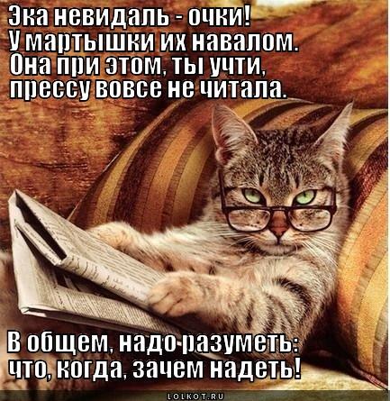 Кот учёный | Лолкот.Ру