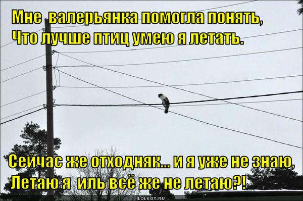 Отчего кошки не летают, как птицы?