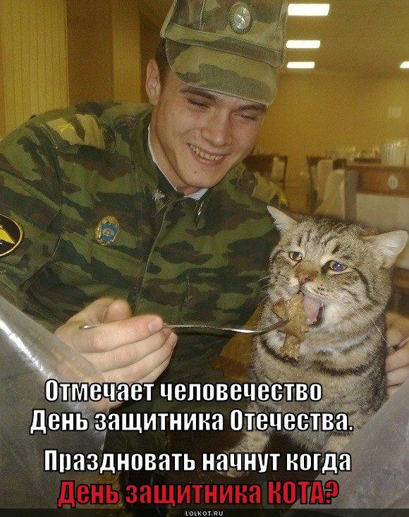 День защитника кота