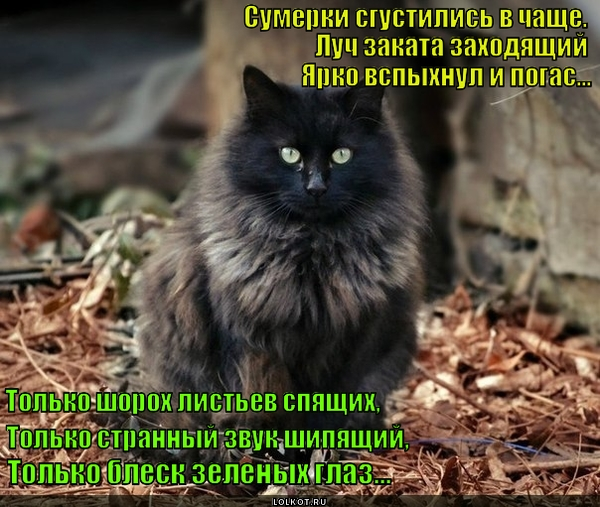 Котейка в лесу