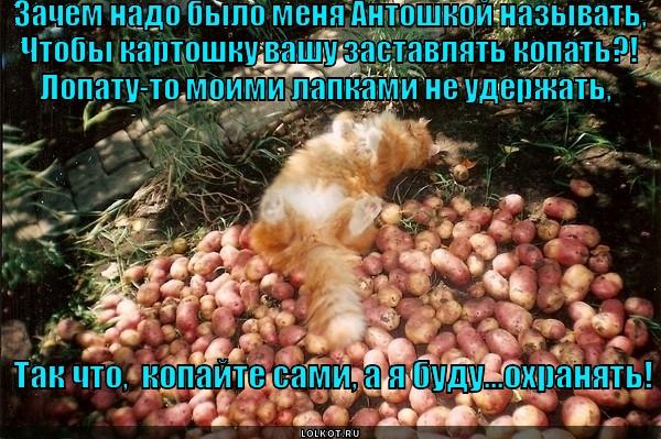 Охрана для картошки