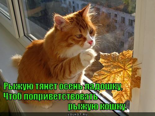 Две ладошки - нежные кошки (с)