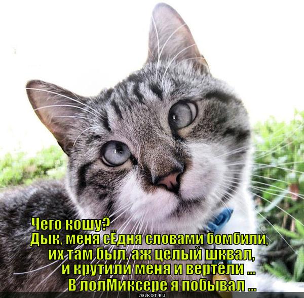 Круговорот котов в Лолмиксере