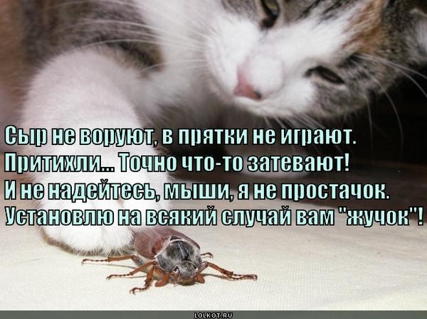 Шпионский кот
