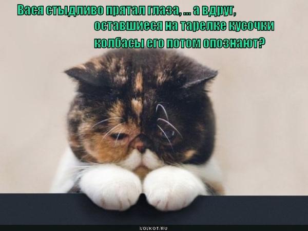 Это тот кот, который на вас напал?