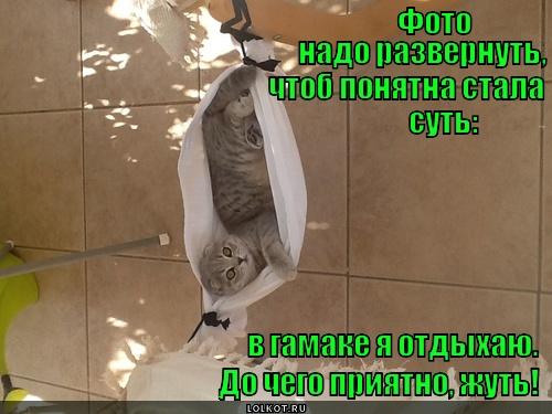 Гамаков кот