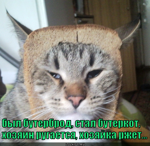Хот Кот