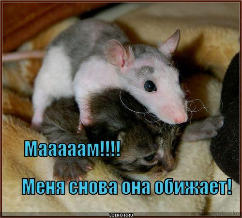 Крыса обидчица
