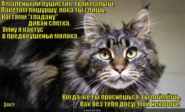 Досуг одного кота