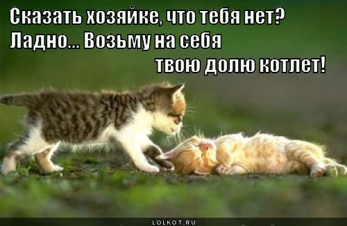 Друг в беде не бросит