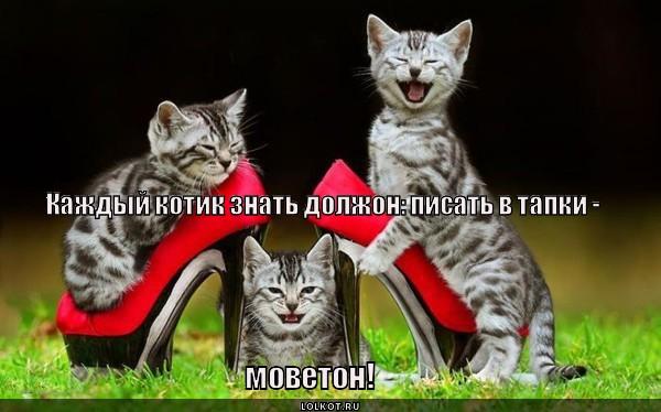 Кошачья заповедь