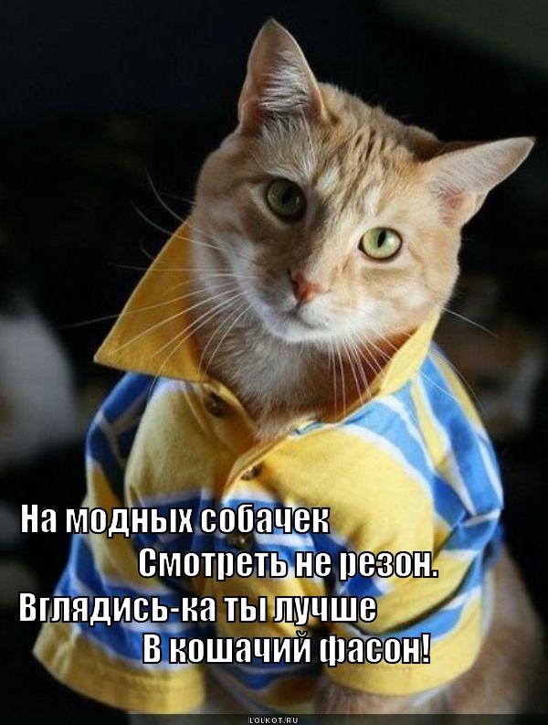 Котики в моде