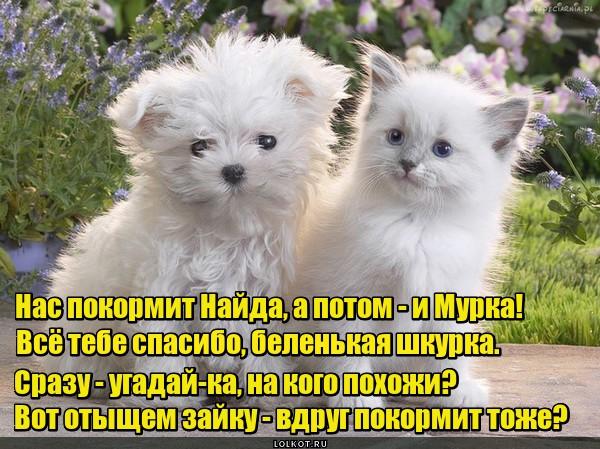 Молочные детки