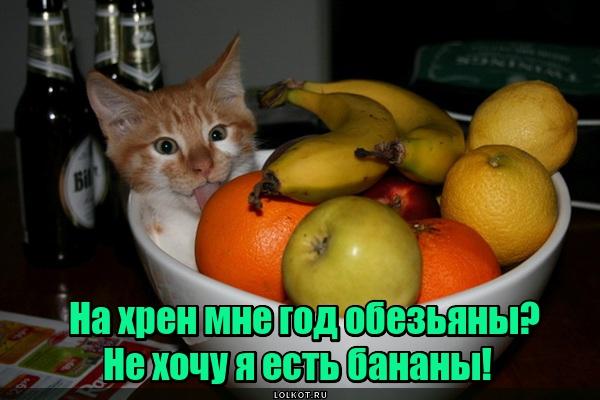 Даешь год кота!