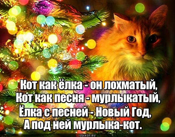 Мурлыкатый кот