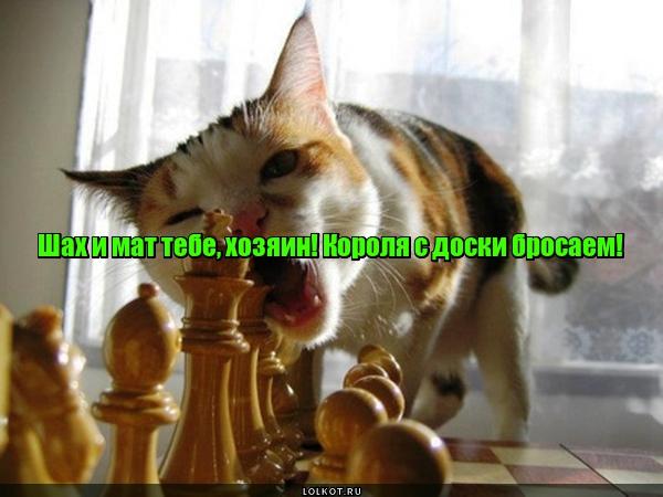 Шах и мат по-кошачьи