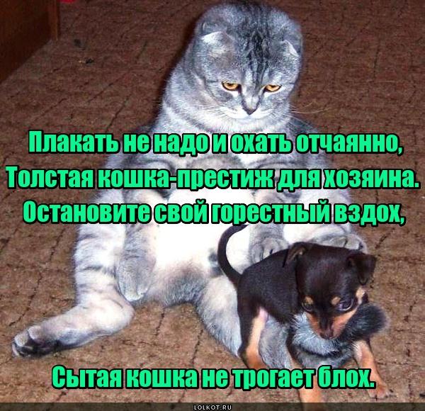 Толстый кот - достаток в доме