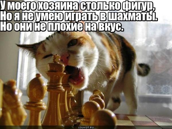 """Шахматный клуб """"Маринованный конь"""""""