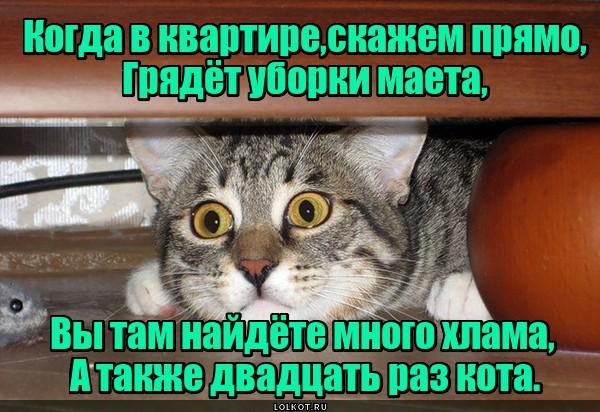 Везденайденный кот