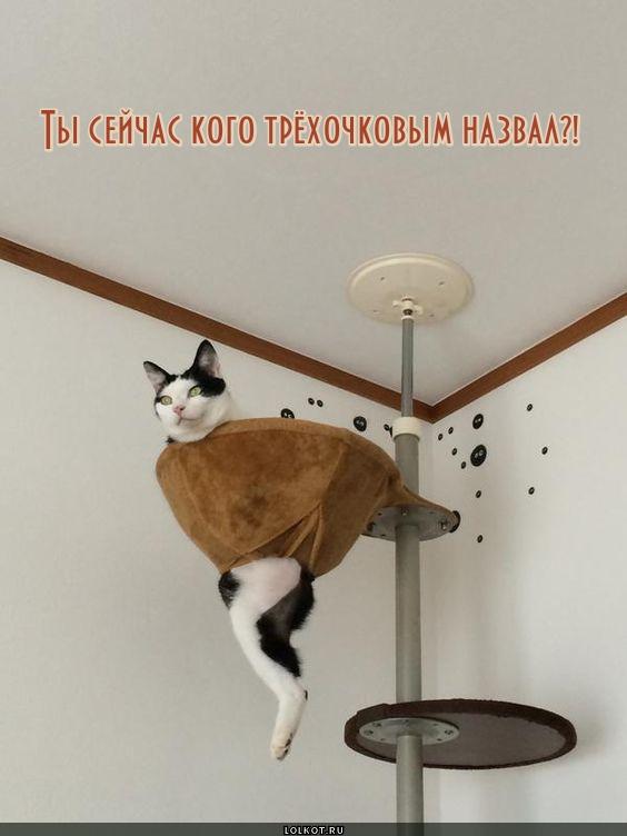 Кот Майкла Джордана