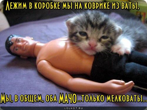 Мелкие мачо