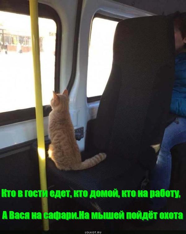 На трамвае на сафари