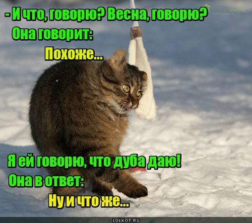 Тра-та-та, тра-та-та, мы весной хотим кота!