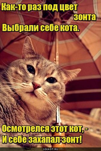 Для чего коту зонт?
