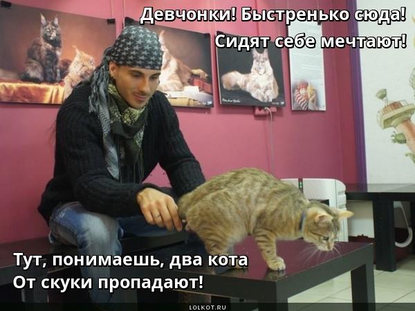Кошачья зазывная