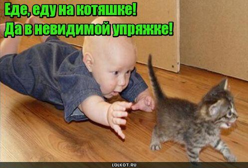 Прогулки на котяшке